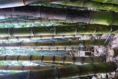 Peranediya -Botanical Garden Riesenfarn- Sri Lanka - diekreuzfahrtblogger.de