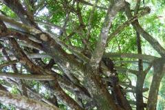 Peranediya Botanical Garden Sri Lanka - diekreuzfahrtblogger.de