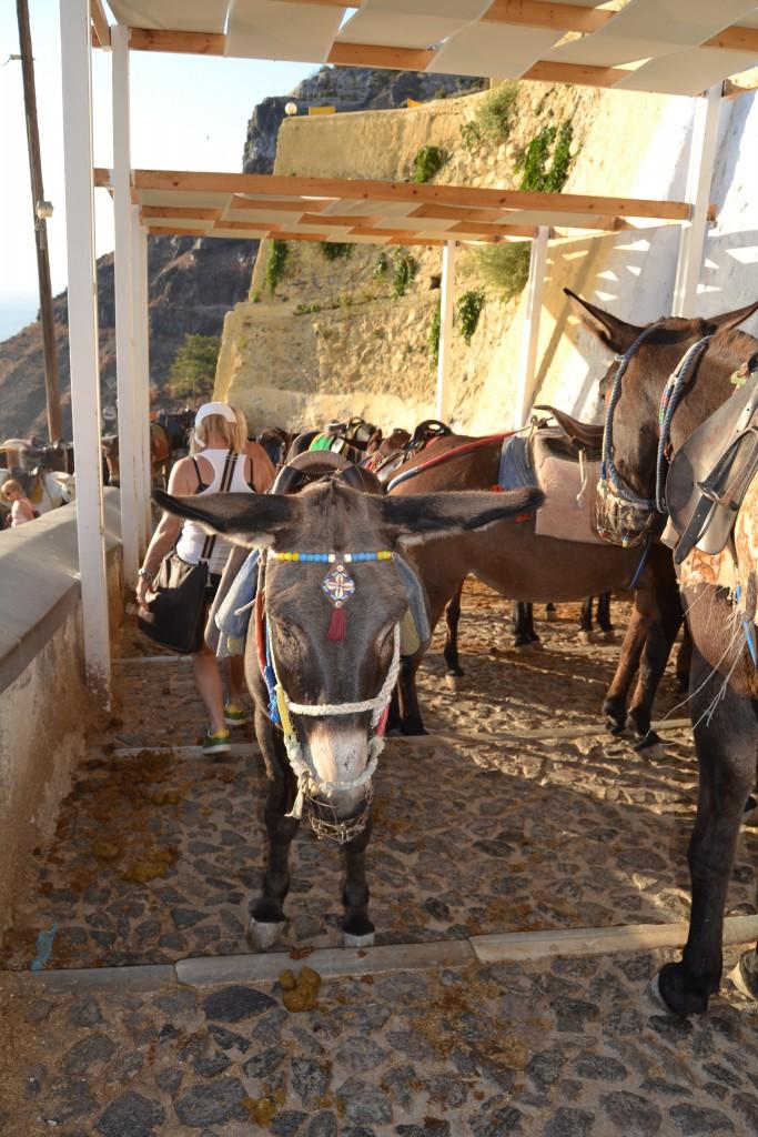 Santorini Esel-Stau Copyright S. Schaeffer