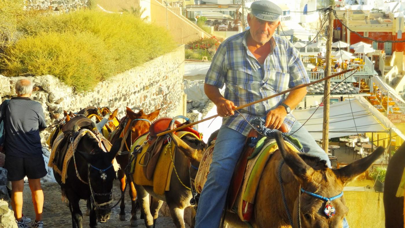 Santorini Esel in Fira warten auf Gäste Copyright S. Schaeffer
