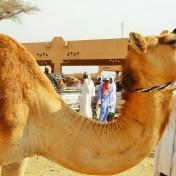 Al Ain Wüstenstadt ca. 60 Km. von Abu Dhabi entfernt.