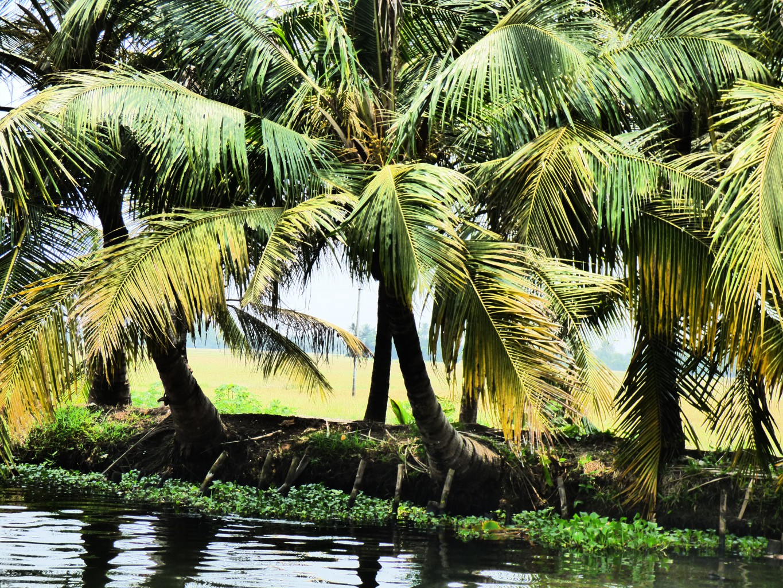 Blick von den Backwaters in die Reisfelder