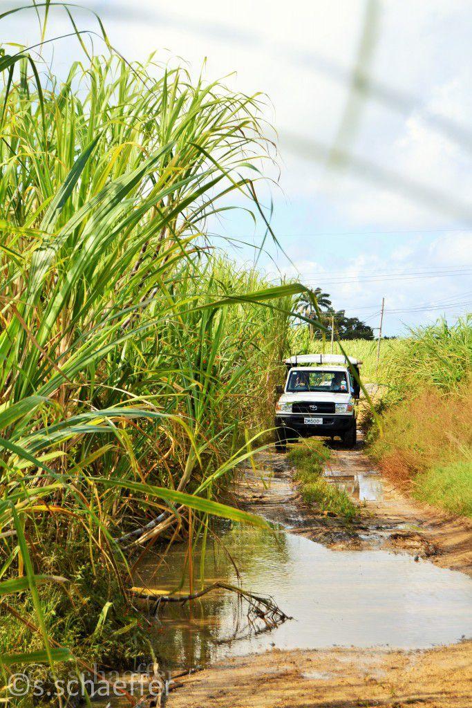 Karibik: Jeep-Tour auf Barbados
