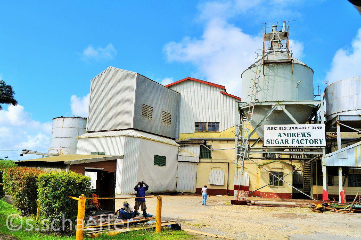 Barbados: Sugar Factory
