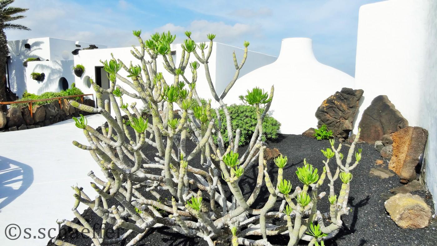 Manriques Wohnhaus inmitten der kargen Vulkanlandchaft