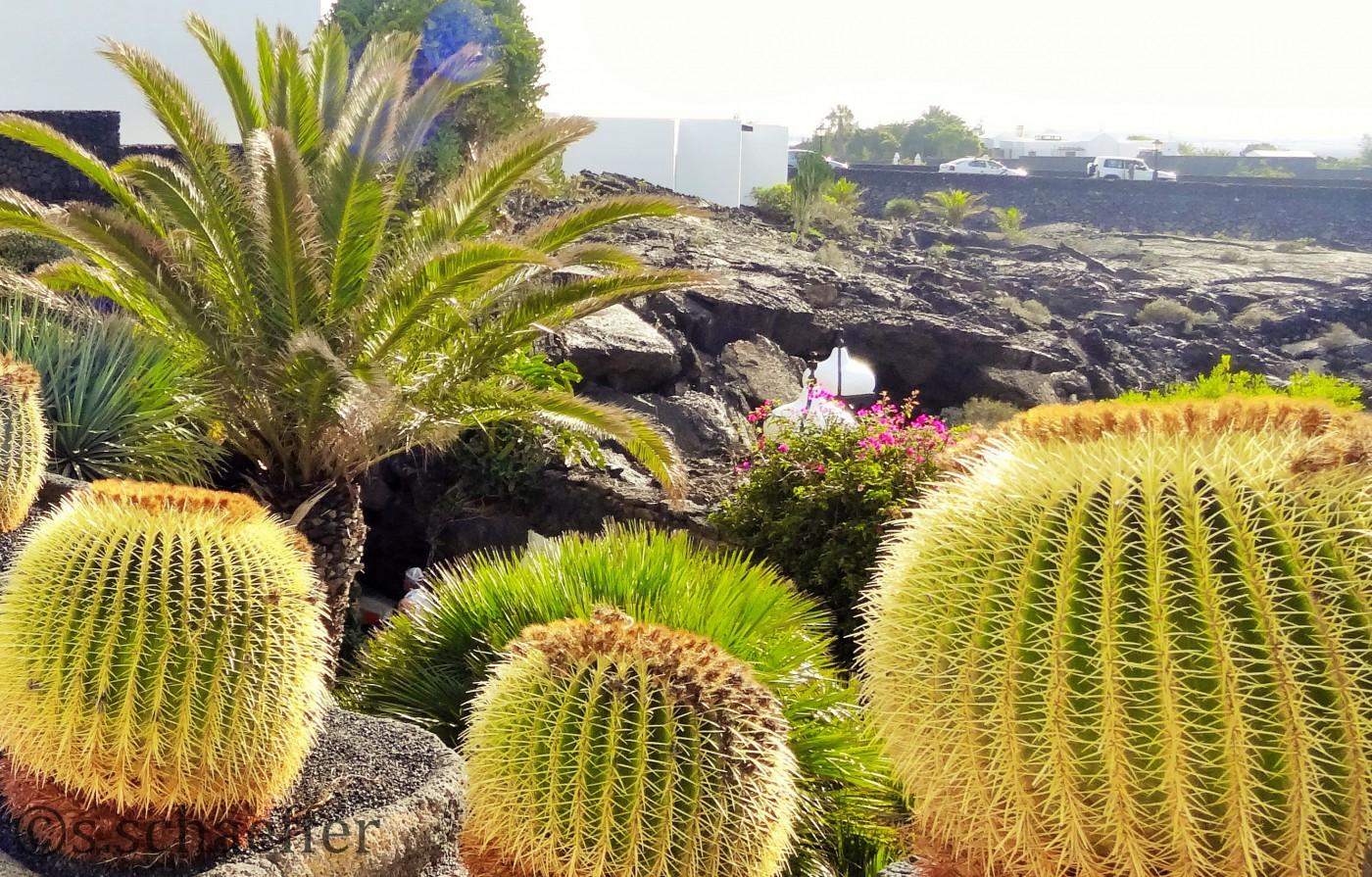 Flora und Fauna, Lanzarote