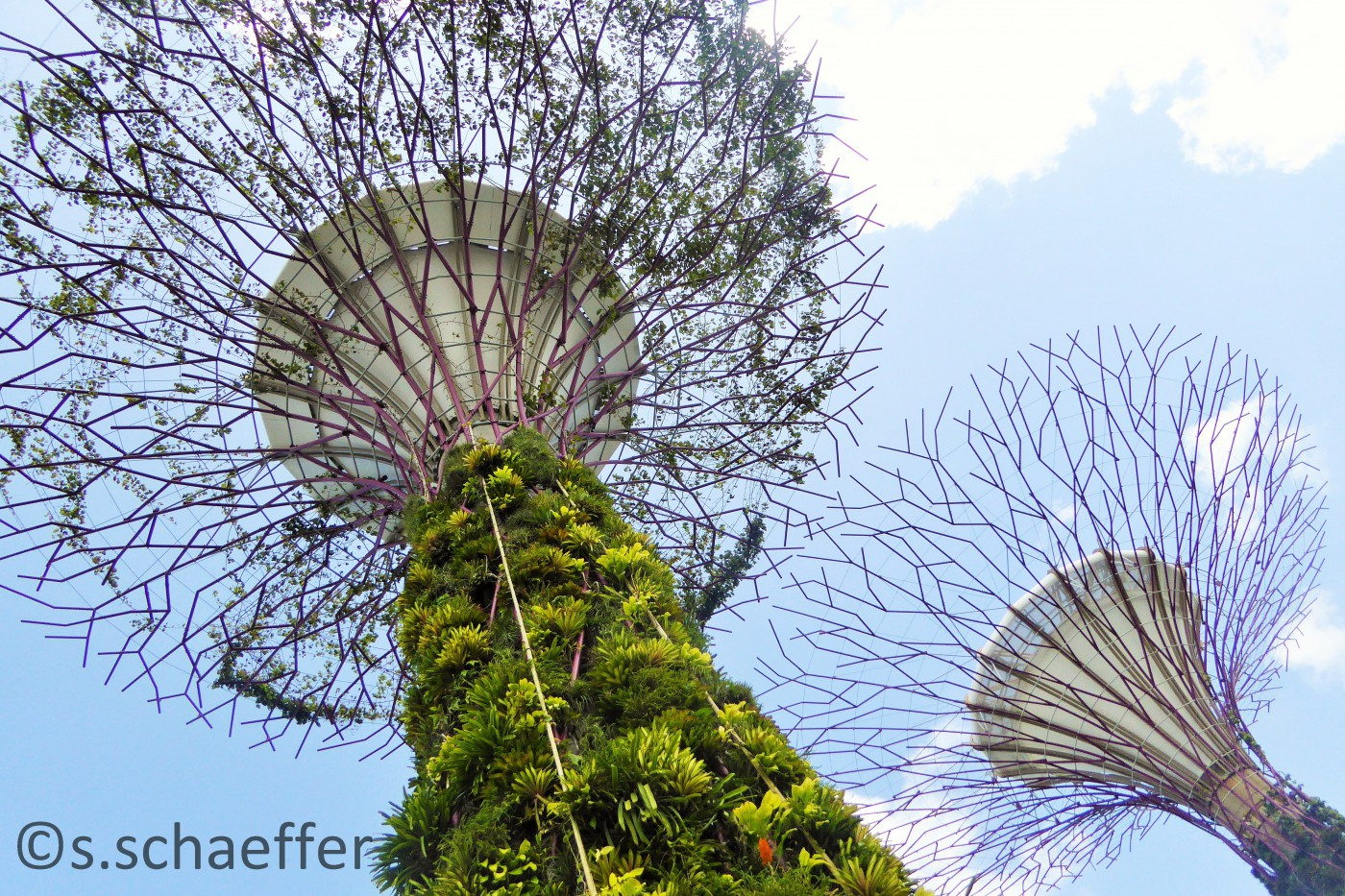 Gardens By the Bay Supertrees Singapur ©s.schaeffer