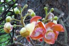 Peranediya -Botanical Garden - Sri Lanka - diekreuzfahrtblogger.de